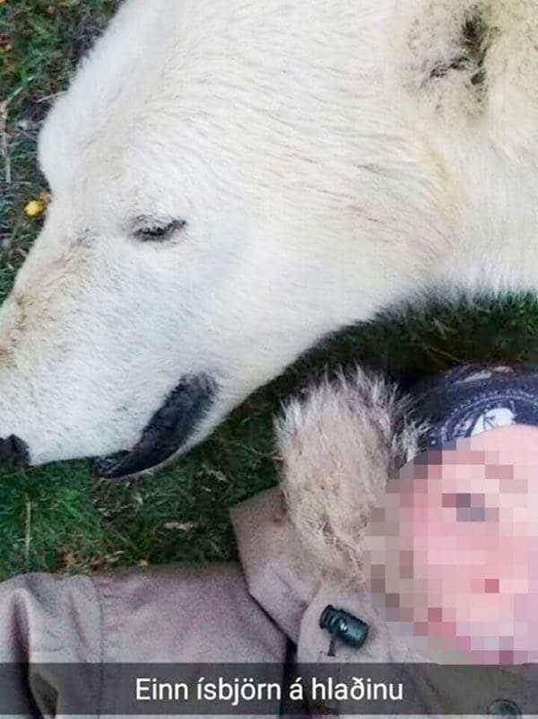 Un autre selfie de l'ours polaire