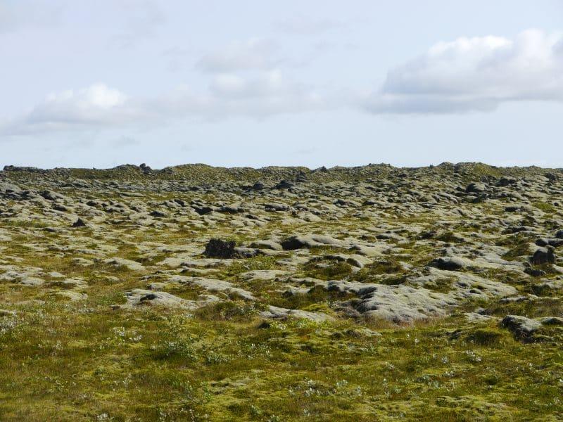 champ de mousses d'Eldhraun