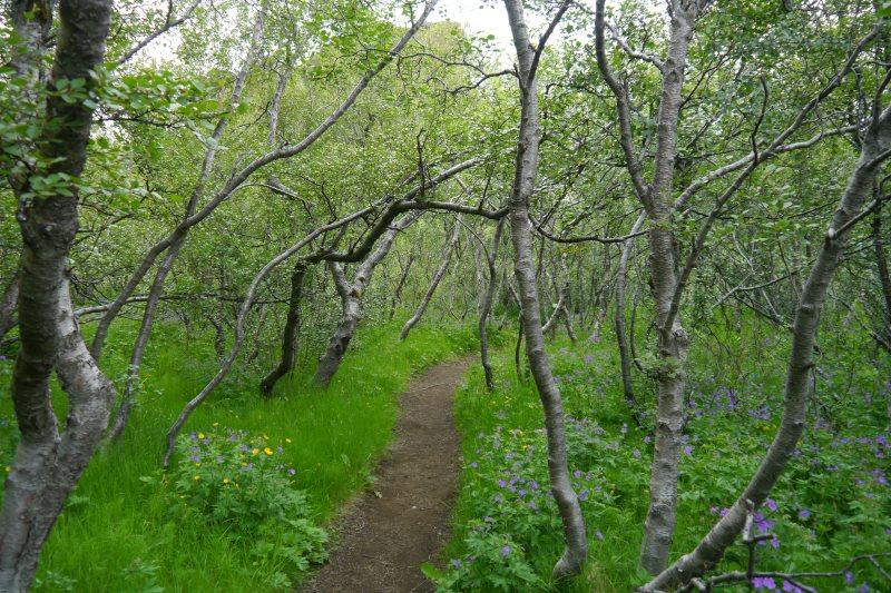 Forêt de Thorsmork