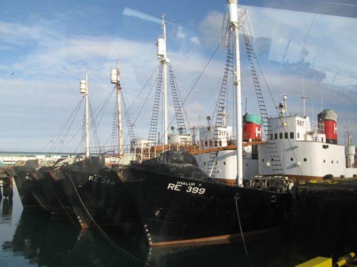 Baleinier en Islande