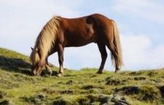 excursion cheval