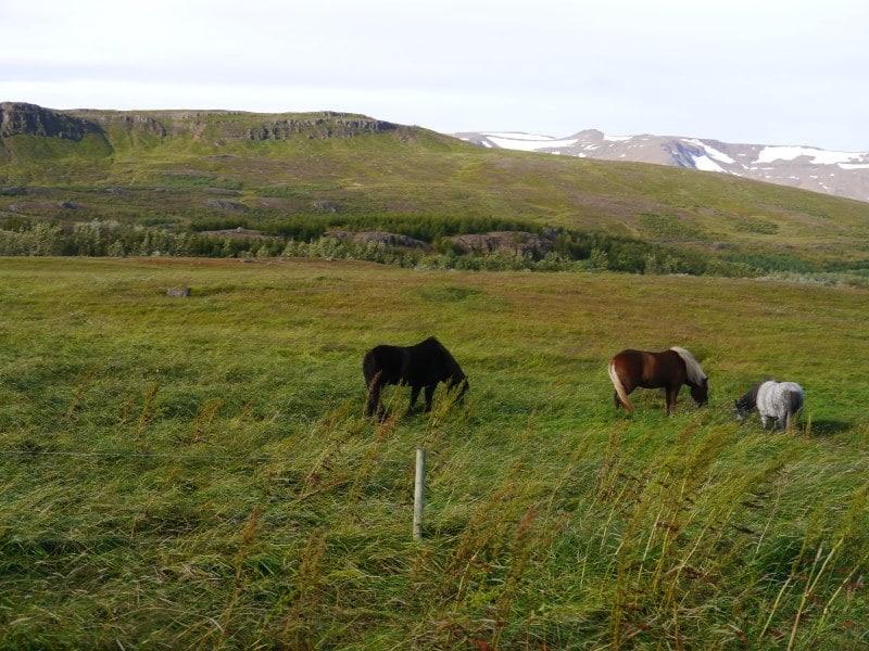 Sud d'Akureyri