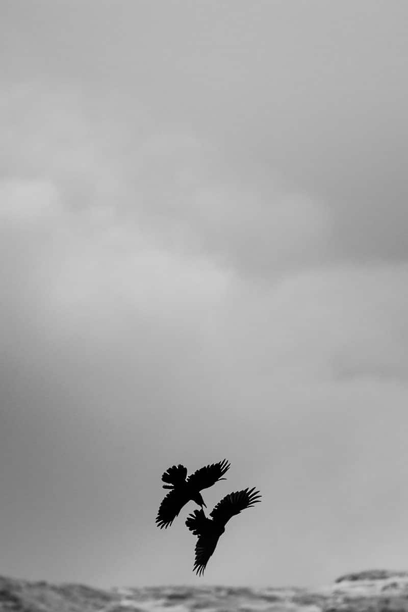 La danse des corbeaux